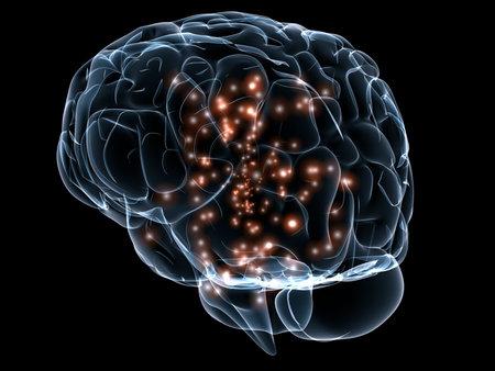 cerebrum: active human brain