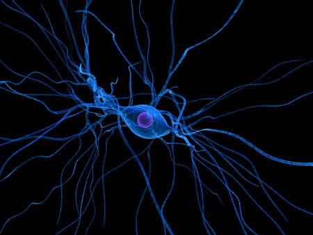 cellule nervose: isolate cellule nervose Archivio Fotografico