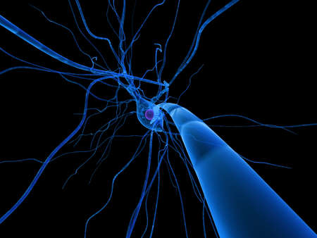 synapse: isolated nerve cell