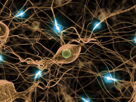 nerve cell: active nerve cells