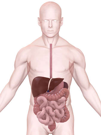 ache: digestive system