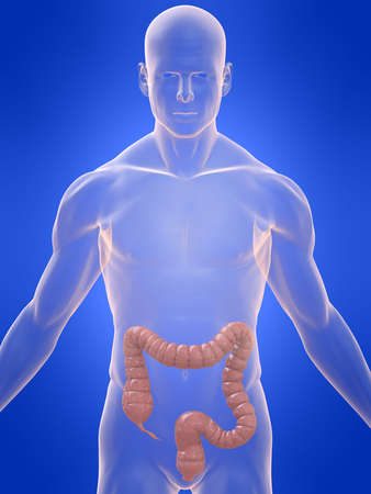 human colon Stock Photo - 4757691
