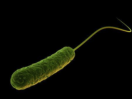 causative: rod shaped bacterium