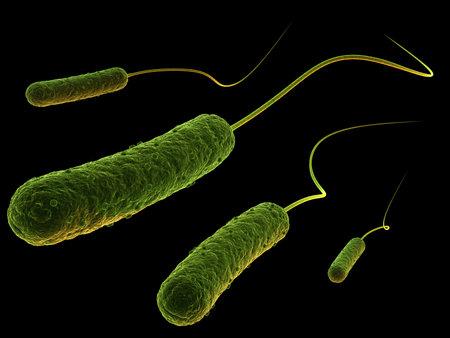 rod shaped bacteria Stock Photo - 4994256
