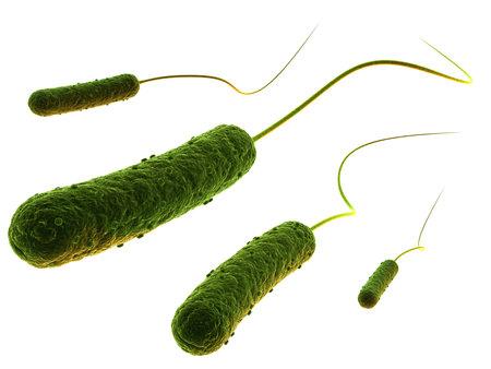 bacterias: bacterias en forma de vara