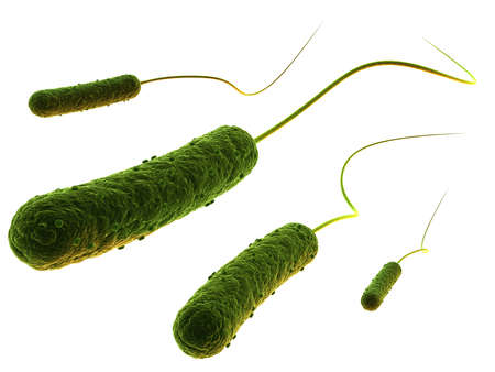 schyzomycete: rod shaped bacteria