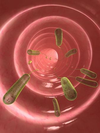 e-coli bacteria Stock Photo - 4994387