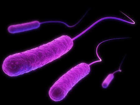 germs: e-coli bacteria Stock Photo