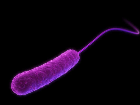 schyzomycete: e-coli bacteria Stock Photo