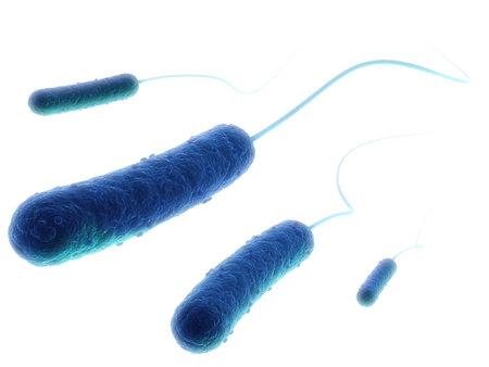 e-coli bacteria Stock Photo - 4844254