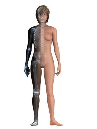 skeletal system: female body with skeletal system Stock Photo