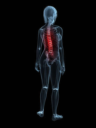 inflammated: transparent female body with highlighted spine