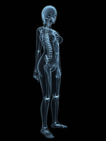 transparent female body with skeletal system
