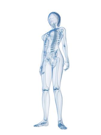 skeletal system: transparent female body with skeletal system