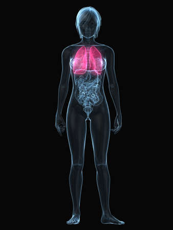 inflammated: transparent female body with highlighted lung