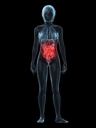 inflammated: transparent female body with highlighted intestines