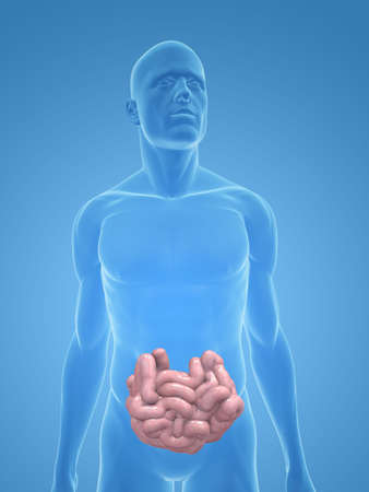 small intestines: transparent male body with small intestines