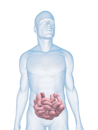 intestines: male body wit small intestines