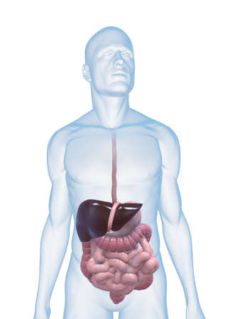 gullet: male body with digestive system Stock Photo
