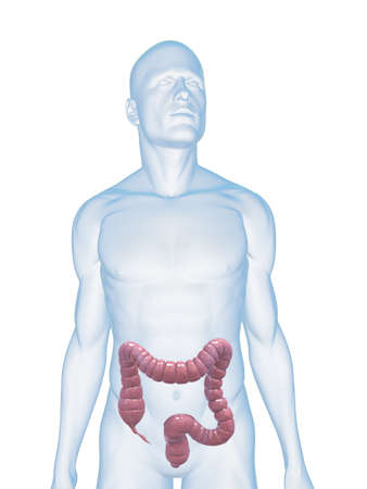 male body with colon photo