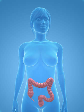 female body with colon Stock Photo - 5273038