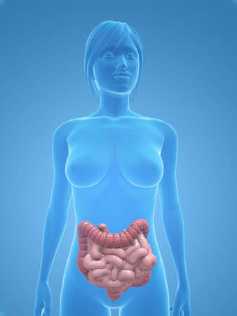 female body with colon and small intestines Stock Photo - 5273003