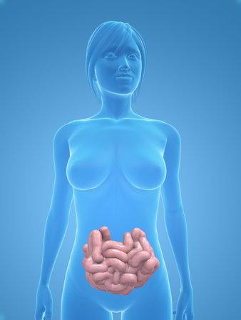 cuerpo de la mujer con el intestino delgado Foto de archivo - 5273067