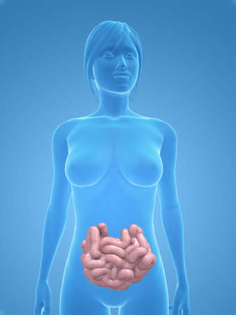 small intestines: female body with small intestines Stock Photo