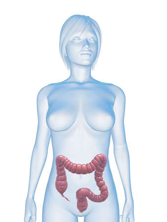 female body with colon photo