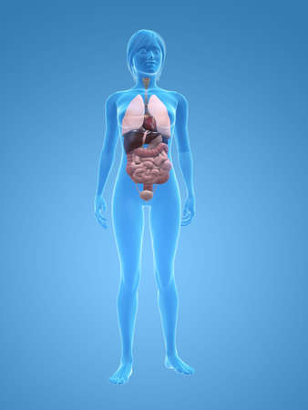 organs: transparent female body with organs