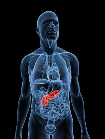 transparent body with highlighted pancreas