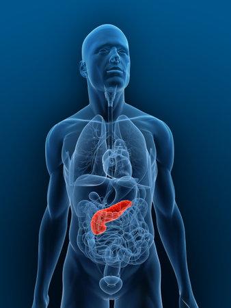 pankreas: transparente K�rper mit hervorgehobenen Bauchspeicheldr�se Lizenzfreie Bilder
