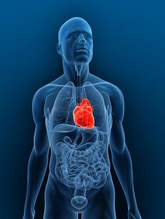 transparant lichaam met de nadruk hart Stockfoto