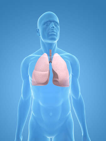 airways: transparent body with lung