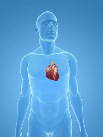 transparent body with heart photo