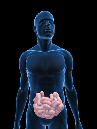 small intestines: transparent body with small intestines