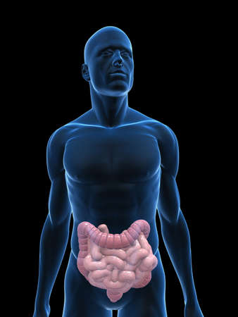 transparent body with colon and small intestines Stock Photo - 5273085