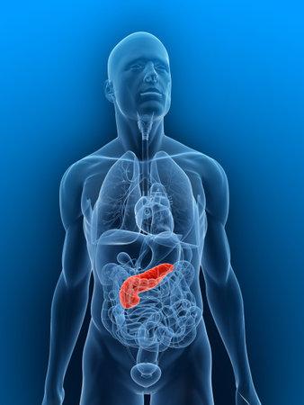 pancreas: corps transparent et le pancr�as en surbrillance Banque d'images
