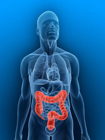 colon: trasparente corpo con due punti evidenziati
