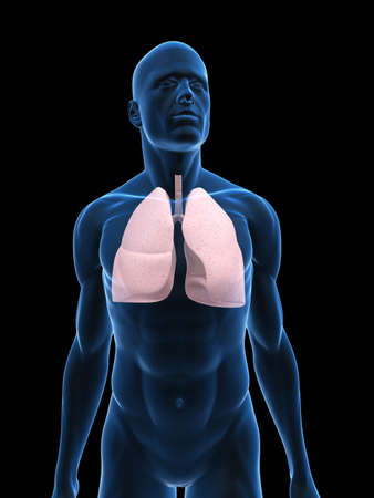 airways: transparent male body with lung