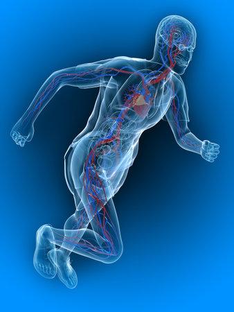 vascular: running - vascular