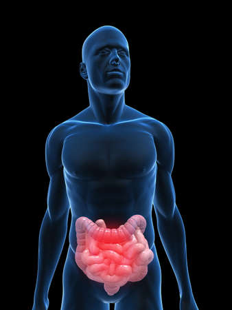 achy: transparent body with highlighted colon and small intestines Stock Photo