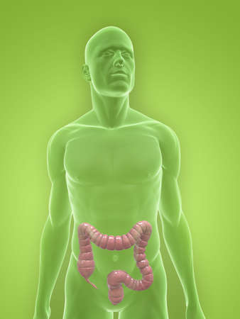 transparent body with colon Stock Photo - 5267721