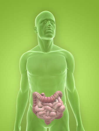 transparent body with colon and small intestines Stock Photo - 5267737