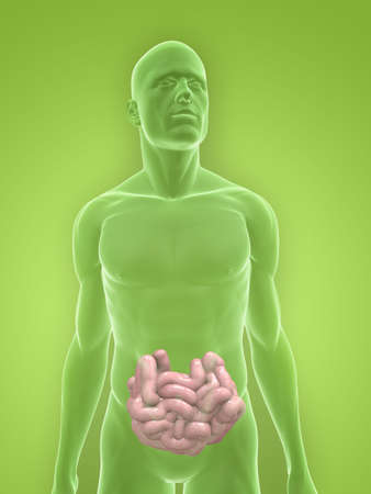 transparent body with small intestines Stock Photo - 5267747