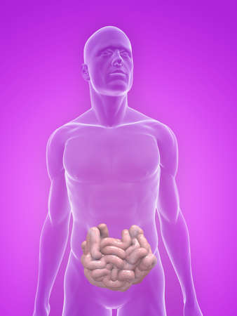 transparent body with small intestines Stock Photo - 5267723