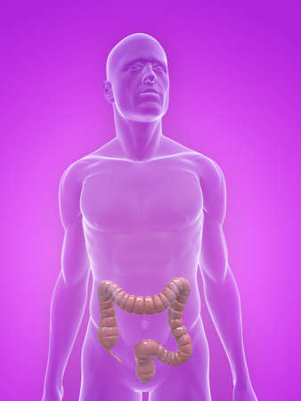 transparent body with colon Stock Photo - 5267742