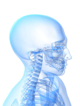 x-ray skeletal head and neck photo