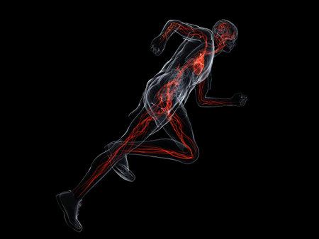 circolazione: esecuzione di uomo - sistema vascolare