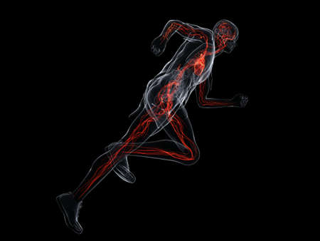 circulation: running man - vascular system